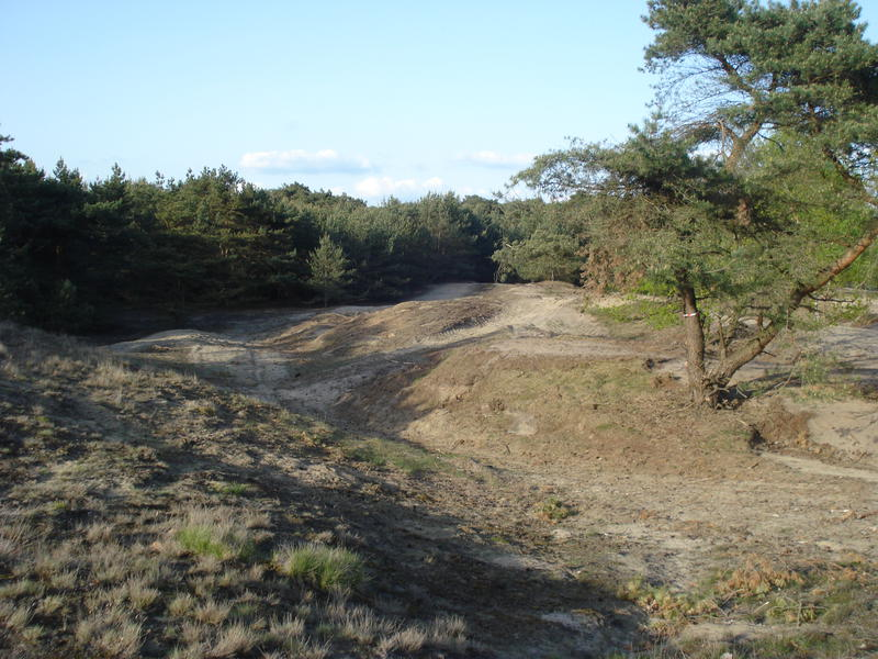 sand and pine forests